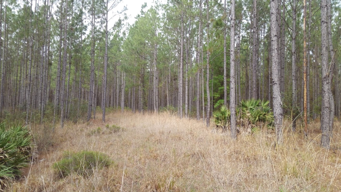 42.8 acres Winding River Preserve