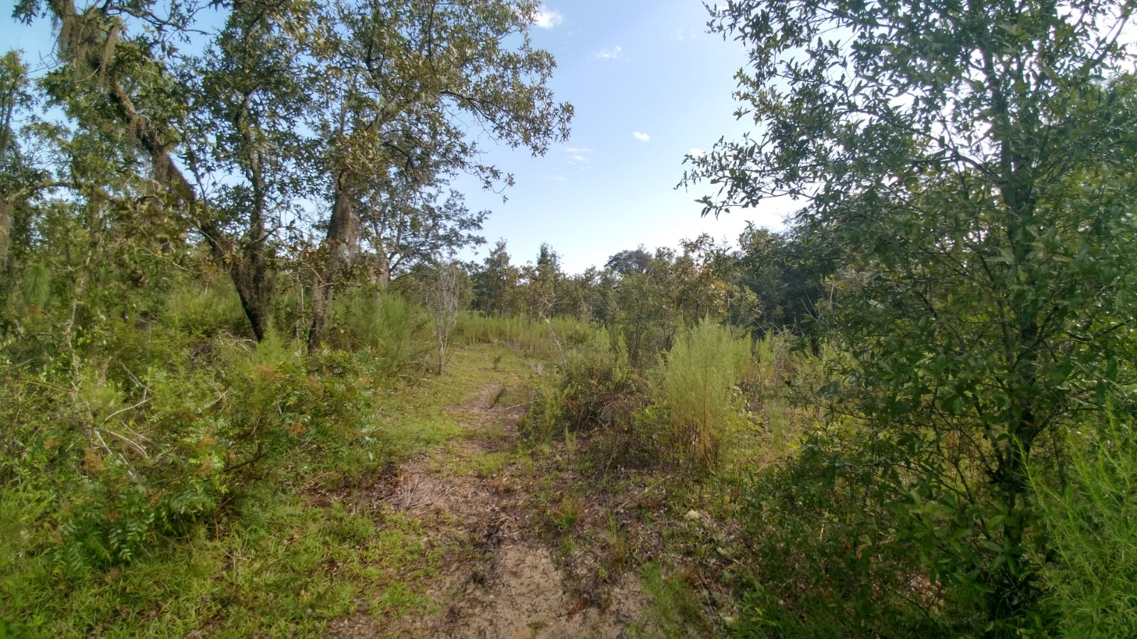 SOLD! 20 Acres Levy County, Florida
